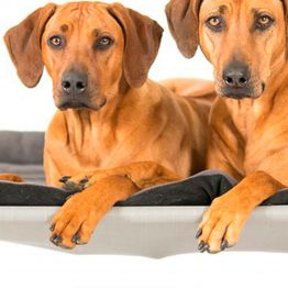 HiK9 Raised Dog Bed