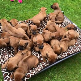 for XXL HiK9 Dog Bed
